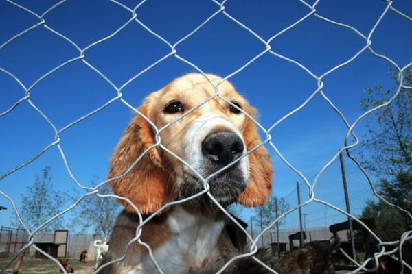 la bans selling dogs