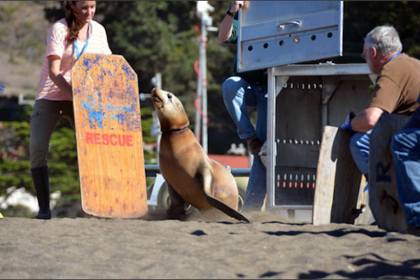 rescued sea lion