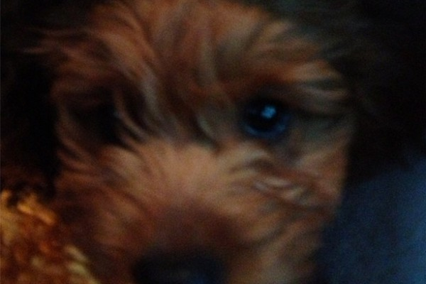 usher's new puppy
