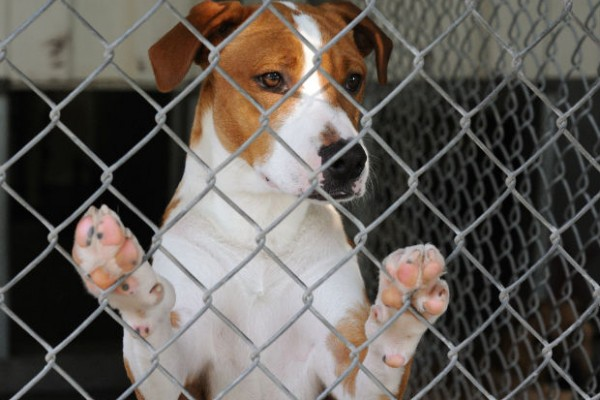 North Dakotans vote against animal cruelty felonies