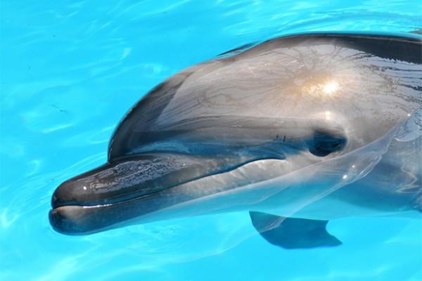 dolphin murders