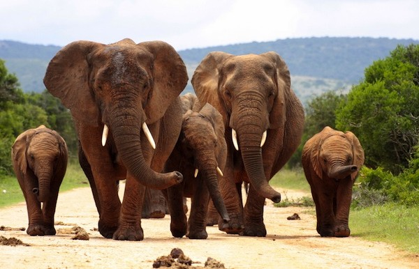 Three endangered elephants were found poisoned near a palm oil plantation in Sumatra.