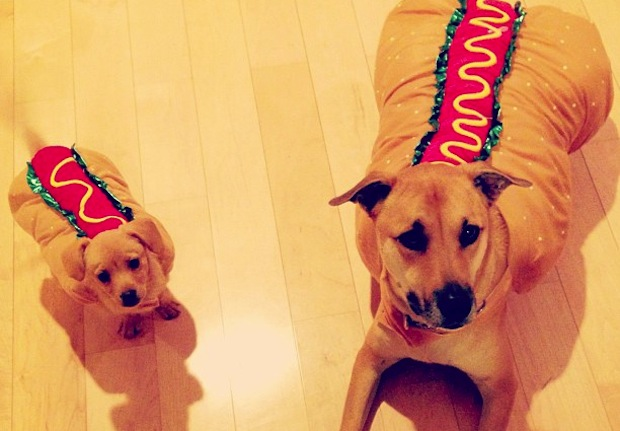 Lauren Conrad dressed her pooches in hot dog costumes for Halloween.