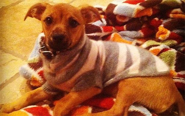 leann-rimes-puppy