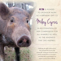 miley cyrus pig
