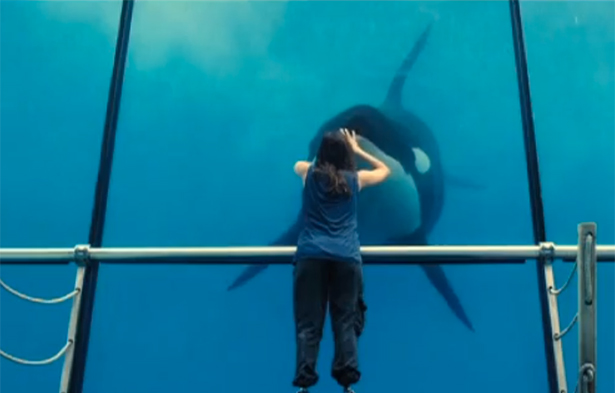 Rust and Bone clip