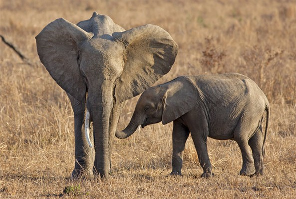 The fight against illegal poaching has gone high-tech, thanks to Google's new three-dimensional maps that help track elephants.
