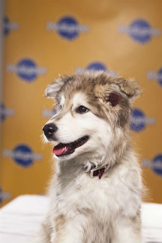 Animal Planet announces 2013 Puppy Bowl starting lineup