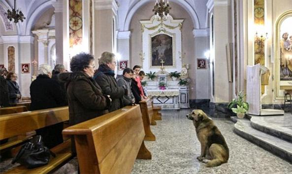dog-mass
