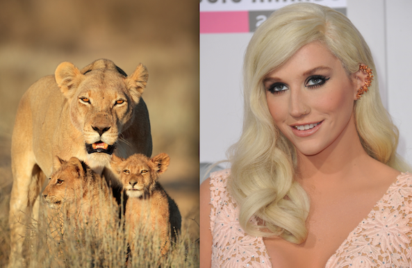 kesha and lions