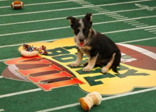 Animal Planet's Puppy Bowl 2013 starting lineup is announced