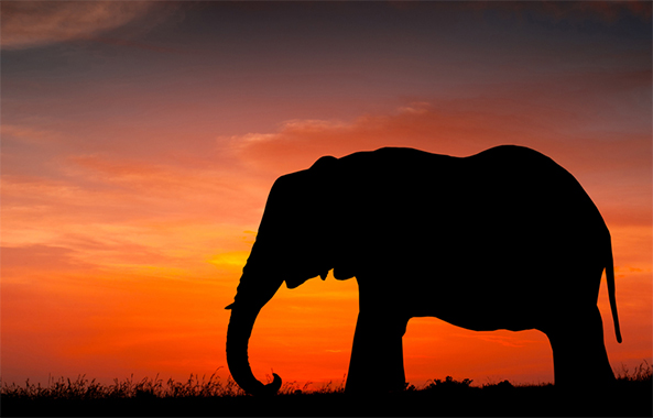 Elephant Poaching in Gabon
