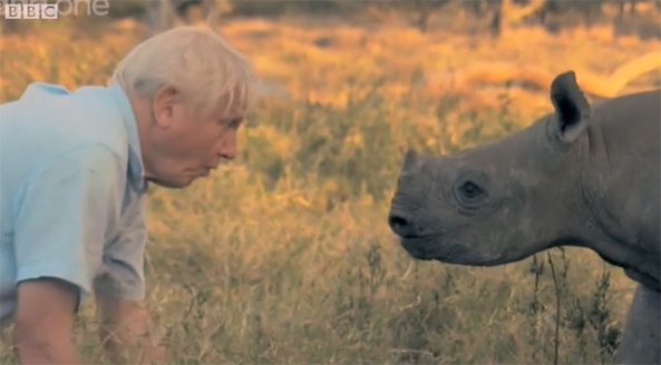blind baby rhino and david attenborough