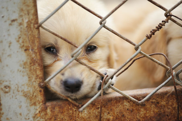 Pennsylvania House of Representatives passes bill forcing abusers to pay care for seized animals