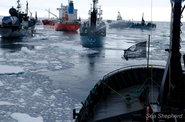 sea shepherd ice