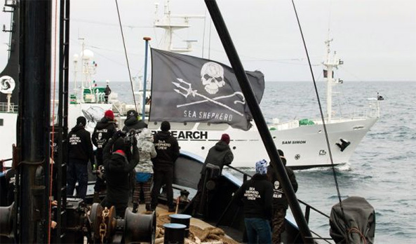 sea shepherd operation zero tolerance