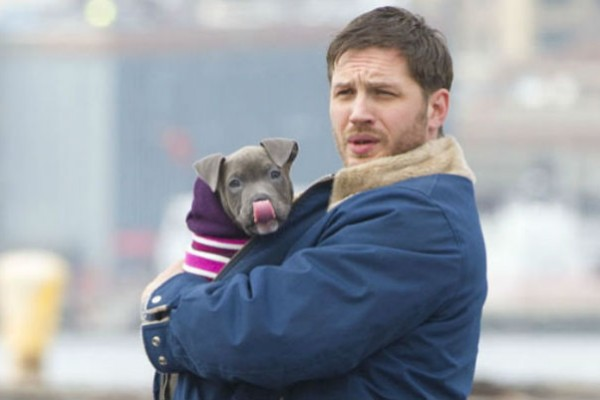 Tom Hardy cuddles with pit bull co-star on 'Animal Rescue' movie set