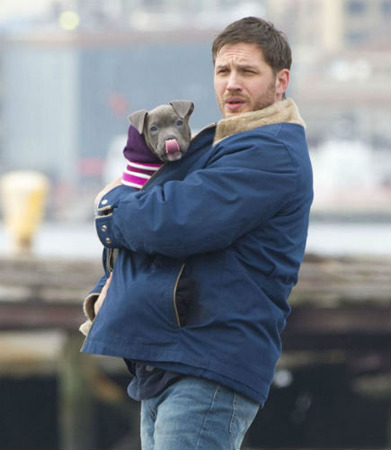 Tom Hardy cuddls with pit bull co-star on 'Animal Rescue' movie set