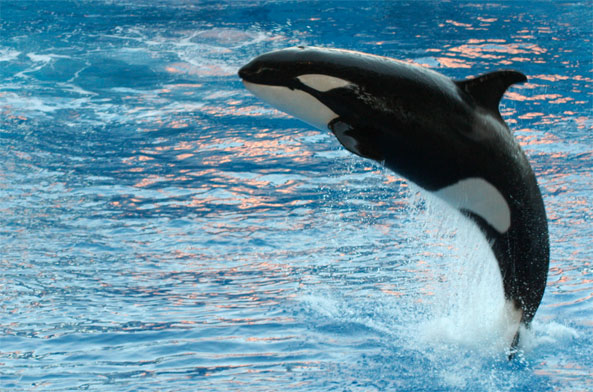 peta seaworld shares