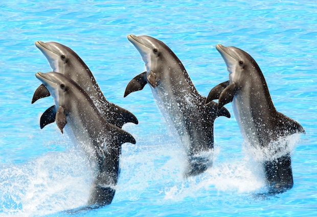"India has banned captive dolphin shows, saying that cetaceans are ""non-human people."""
