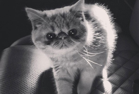 justin bieber has a new kitten