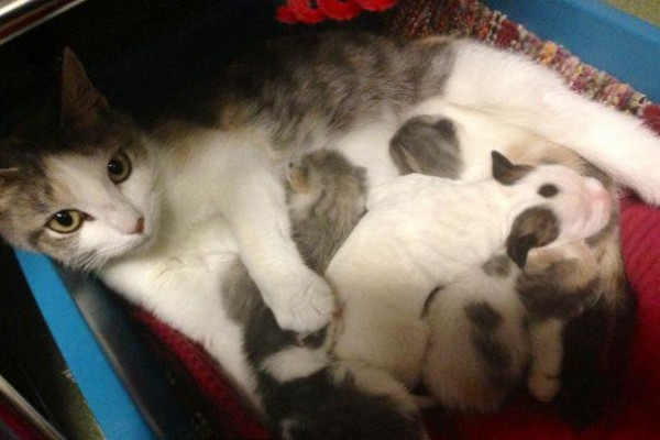 Shelter cat nurses orphaned puppy