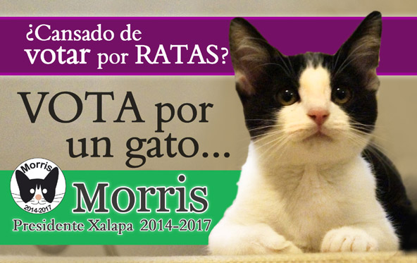 Cat Runs for Mayor in Mexico