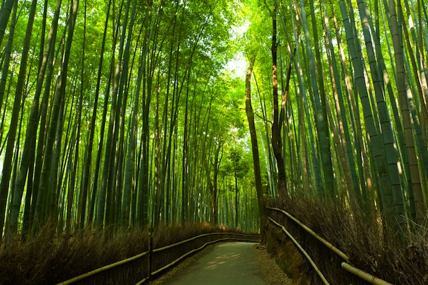 The 500-meter Sagano Bamboo Forest is located in Arashiyama, Japan.