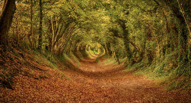 The tunnel of trees near Halnaker, West Sussex, lines an old Roman road that leads to a windmill.