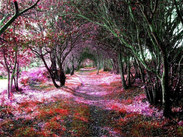 This tree tunnel is in the tiny Spanish town of Sena de Luna, which is home to only 450 people.