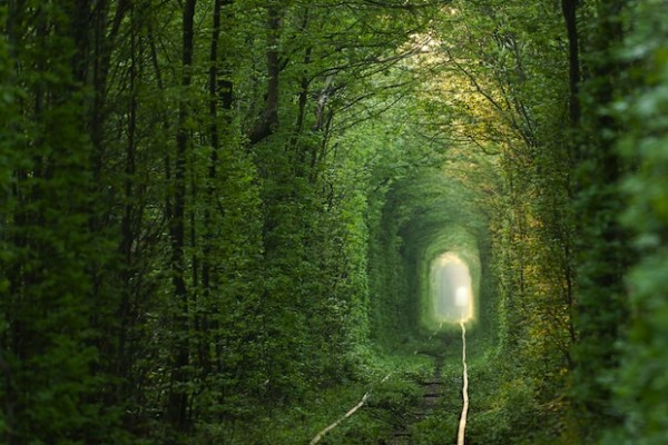 The tunnel of love in the Ukraine developed naturally along a train track.