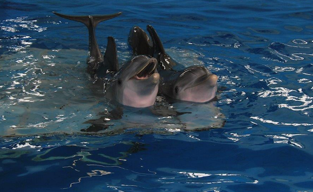 After losing her tail in a crab trap, Winter the dolphin was fitted with a prosthesis so she could swim.