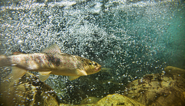 Threatened fish species killed by 2007 fracking fluid spill in Kentucky