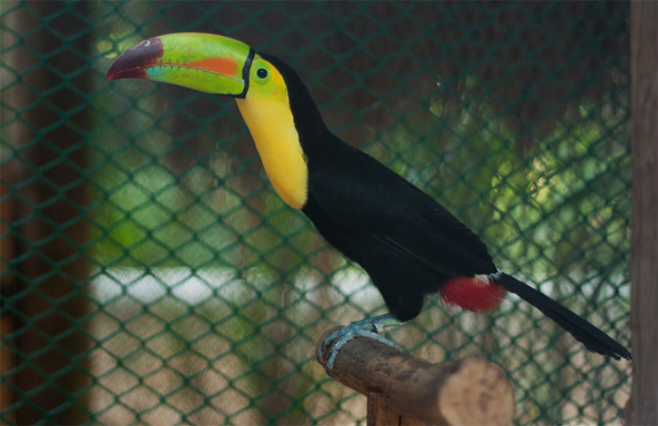 costa rica closing zoo