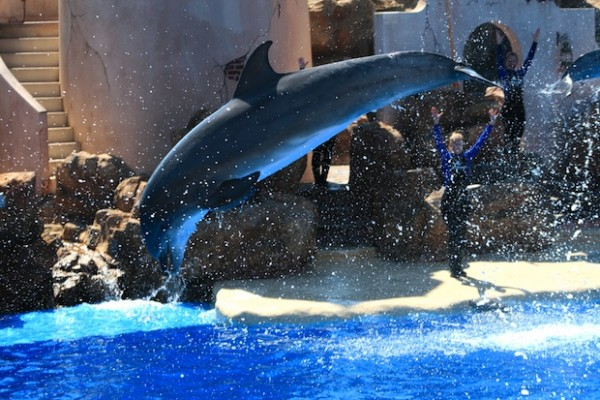 Video of injured, bleeding dolphin sparks more outrage at SeaWorld