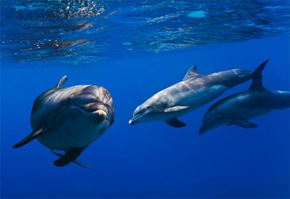 dolphin virus
