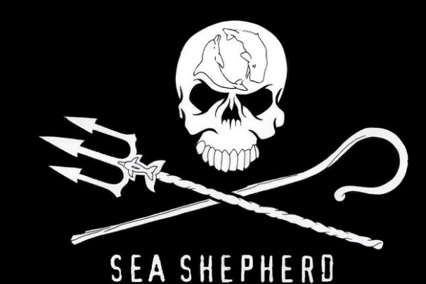 Sea Shepherd to stream live from the cove tonight