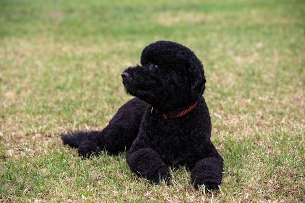 obama adopts dog