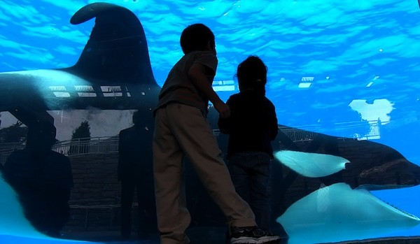 Kids make a powerful video speaking up for whales in response to 'Blackfish' trailer.
