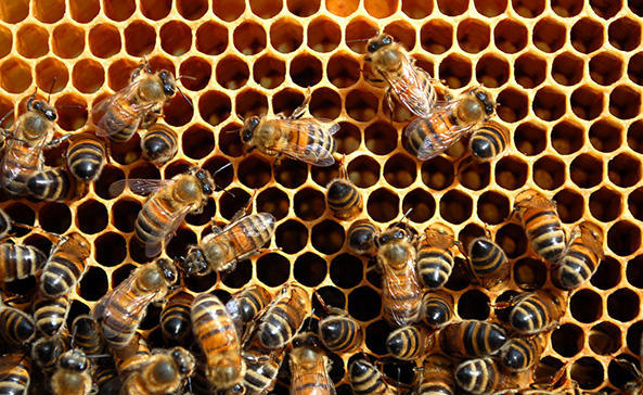 Study Finds Diesel Exhaust Keeps Honey Bees from Finding Food