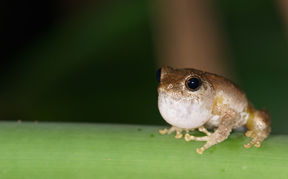 South American rainforest expedition discovers 60 new species