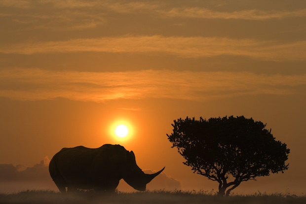 The Dallas Safari Club will auction off the chance to kill an endangered black rhino for 'conservation,' with cooperation of the US Fish and Wildlife Service