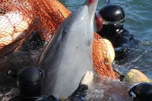 Taiji marine park to let visitors swim with and eat dolphins and whales, not far from the infamous killing cove.