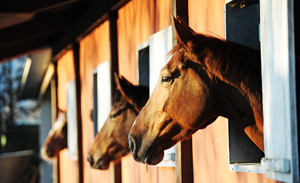 The Humane Society halts opening of horse slaughterhouses in New Mexico and Missouri