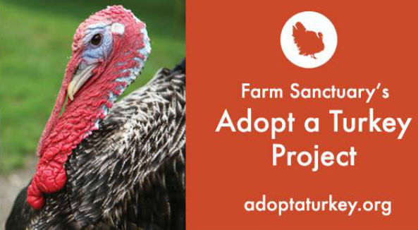 adoptaturkey