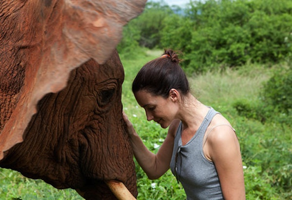 Kristin Davis watches as the government crushes stockpile of illegal ivory in a message to poachers