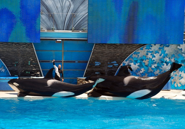 SeaWorld stocks drop as 'Blackfish' takes its toll
