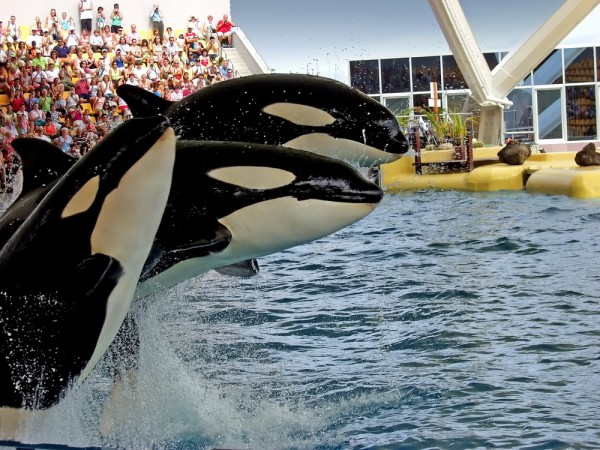 PETA files complaint calling for SeaWorld cruelty charges