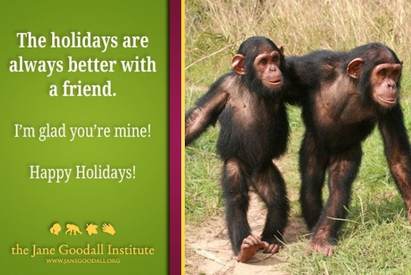 primate greeting card