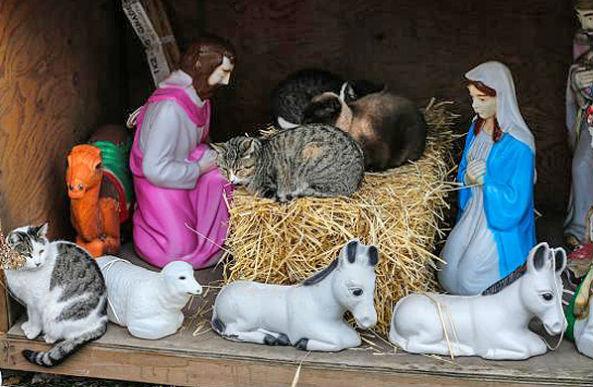 nativitycats
